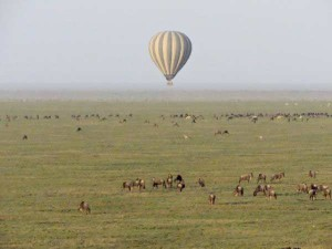 Aerial view of balloon over wildebeest, Serengeti Plain